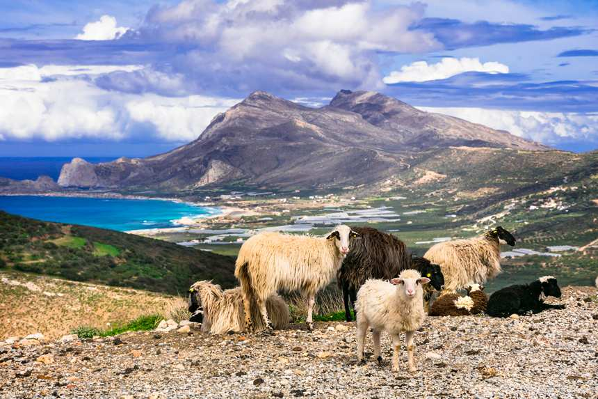 greek_sheeps.jpg